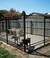 Photo of an ornamental dog kennel.