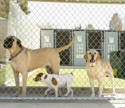 commercial kennels central il