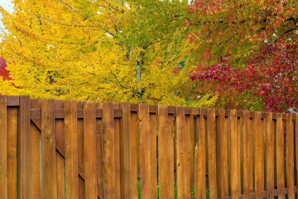 A cedar wood fence in autumn